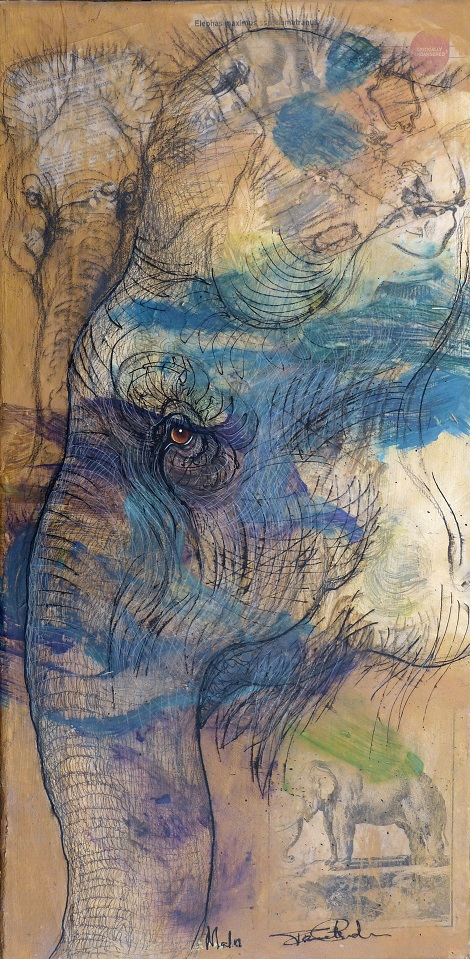 Elephant Story - Acrylic on canvas, by Pamela Conder with colour added by Malu.