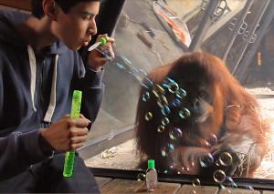 Bubbles 4 copy