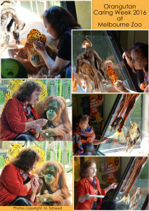 orangutan-caring-week-collage-of-saheed-pics